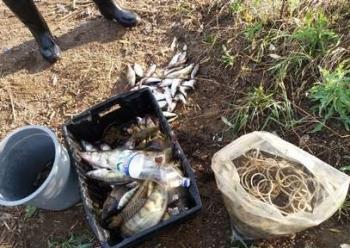 З 7 по 12 жовтня на Донеччині та Миколаївщині затримано 4 порушника правил рибальства