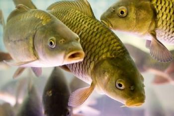 В Україні стартував проект ФАО щодо безпечності рибних продуктів