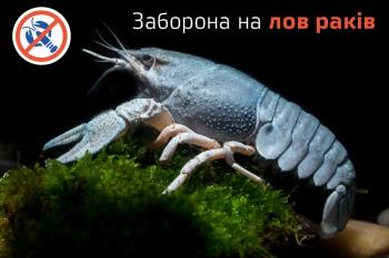 На Запоріжжі розпочинається друга линька раків, - Запорізький рибоохоронний патруль