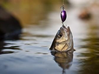 Привітання Спілки працівників рибного господарства України з Днем рибалки