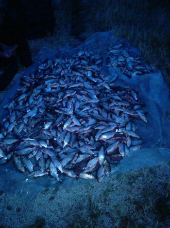 На Одещині оперативна група Держрибагентства затримала порушників, які виловили більше 245 кг риби