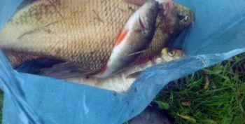 Екологічне лихо на Житомирщині: у  р. Случ масово гине риба