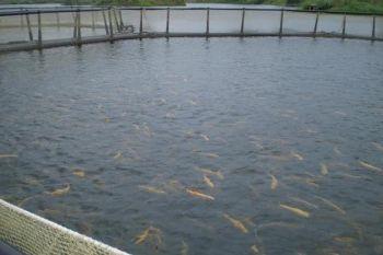 За зверненням Держрибагентства прокуратура Черкаської області відкрила кримінальне провадження проти  «Іркліївського розплідника рослиноїдних риб»