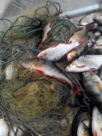 Управління оперативного реагування «Рибоохоронний патруль» затримало порушників на Бурштинському і Червонооскільському водосховищах