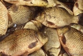 За 2 місяці роботи рибного патруля показники промислового вилову риби зросли в 2 рази - Держрибагентство