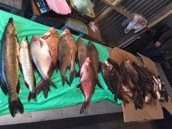 Повідомлення від активіста допомогло припинити продаж браконьєрської риби  на ринку Черкащини, - Держрибагентство