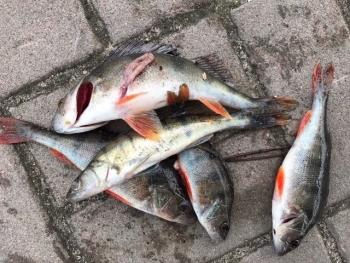 За 1 день роботи Управління оперативного реагування спільно з Київським рибоохоронним патрулем зафіксували 7 порушень