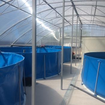 На Київщині відкрилася нова рибна ферма із вирощування кларієвого сома