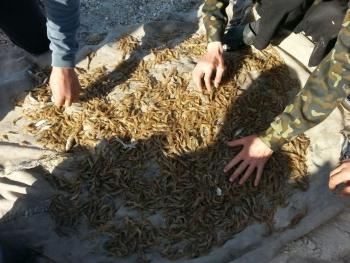 Збитки на 8 млн грн. зафіксували Чорноморський рибоохоронний патруль та прикордонники