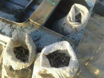 Азовський рибоохоронний патруль виявив порушення зі збитками в 248 тис грн