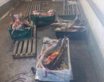 Збитки на 2 млн зафіксували Одеський рибоохоронний патруль, поліція та прикордонники