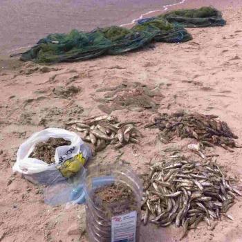 Чорноморський рибоохоронний патруль та прикордонники зафіксували порушення зі збитками в 14 млн грн