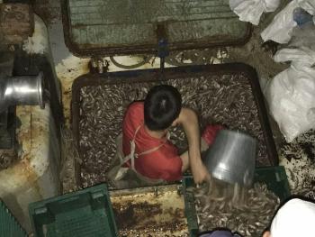 Азовський рибоохоронний патруль спільно з працівниками СБУ виявили порушення на 11,6 млн грн
