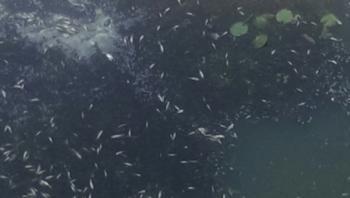 Житомирський рибоохоронний патруль оперативно виїхав на місце загибелі риби на р. Гуйва