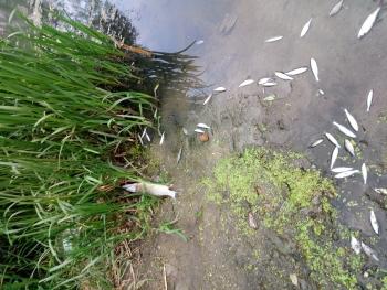 Житомирський рибоохоронний патруль встановлює причини загибелі риби на р. Тетерів