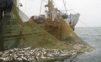 Офіційне роз'яснення щодо запасів промислових видів риб у Азовському морі в 2017 р.